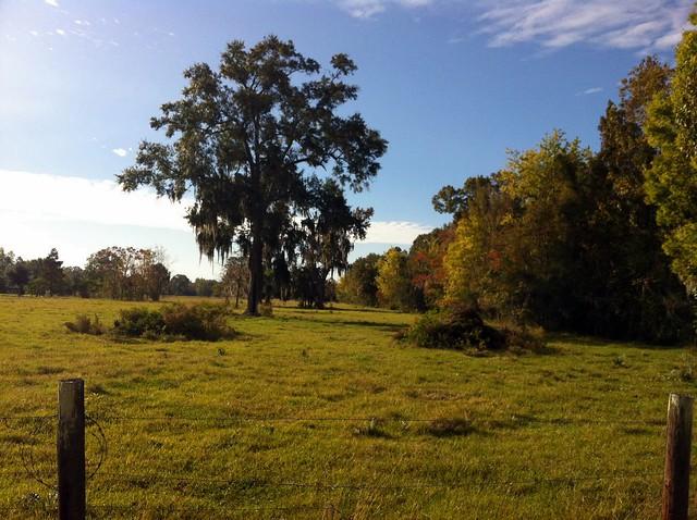 empty pasture