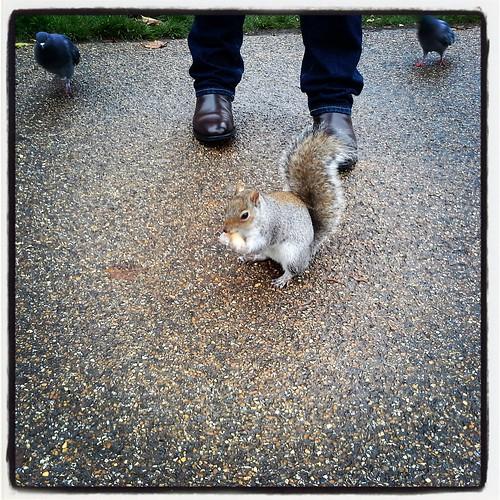 uno scoiattolino di  St. James's Park