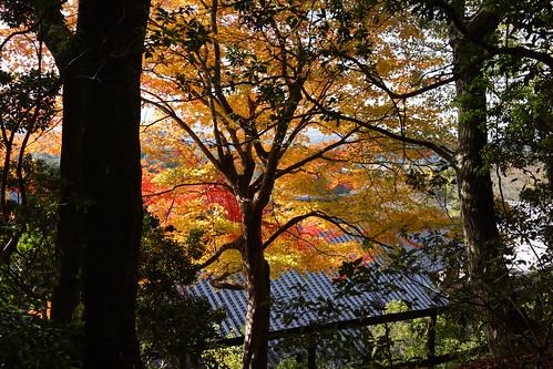 二月堂の紅葉