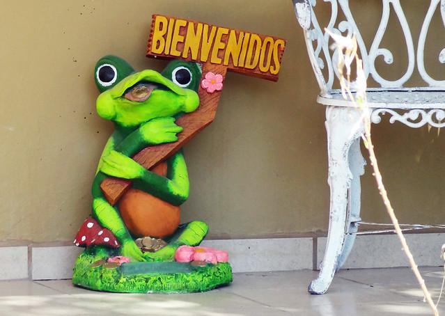 bienvenidos-frog