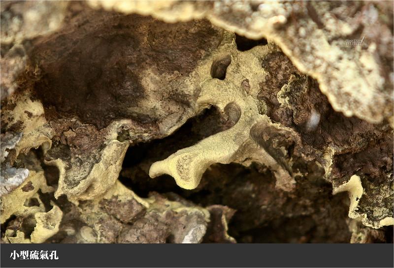 小型硫氣孔近觀
