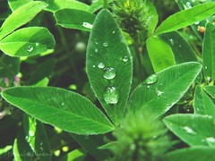 green and waterdrops