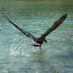 Fly away!