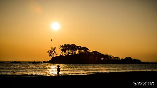 morning winter sea sun seascape tree silhouette sunrise asia seagull earlymorning korea southkorea morningtwilight