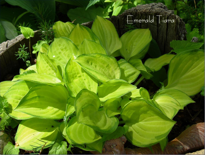 Emerald Tiara 5-19-13 (66)