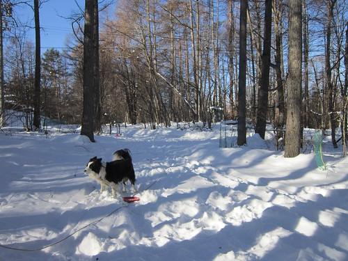 雪掻き前のアプローチ 2014年1月6日9:12 by Poran111