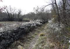 Foto per 4. Tratto di sentiero carsico tra muretti in pietra e fioriture primaverili.