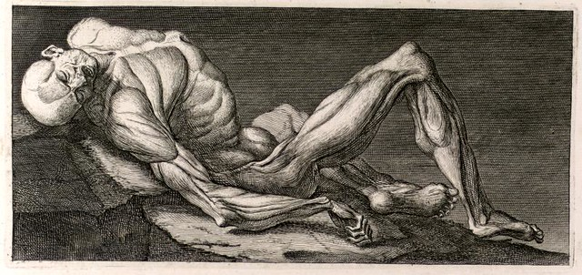 Photo:Muscles By:Thomas Fisher Rare Book Library, UofT