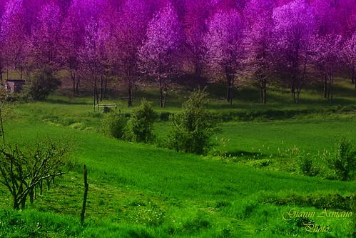 italy color photo italia foto natura piemonte april aprile ge colori gianni ima alessandria landascape armano volpeglino