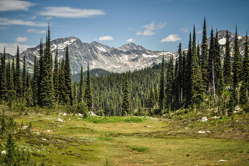 Mount Revelstoke National Park, Kootenay Rockies, British Columbia, Canada