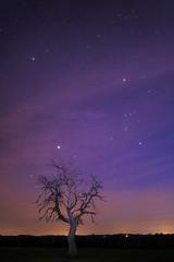 Orion - Le Grand Chien - 20170327