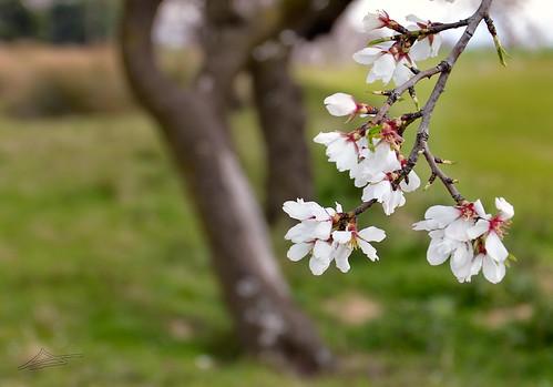 La primavera llamando a la puerta