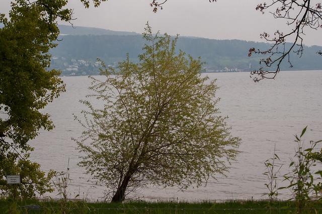Untersee am Ufer Reichenau-S, Nikon D300S, AF-S DX VR Nikkor 55-300mm f/4.5-5.6G ED