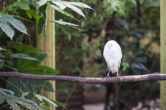 twycross zoo  -3169