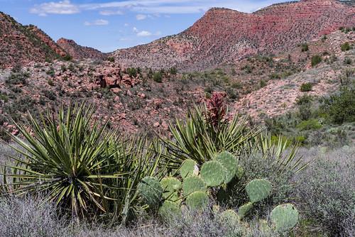 arizona coconinonationalforest fr131 fr9508 forestservice pentaxk1 redrockrangerdistrict sycamorecanyonroad usfs verderiver desert forest outdoors clarkdale unitedstates