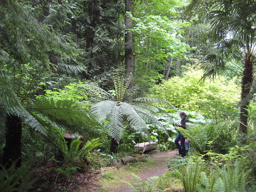 Tree Ferns near bog