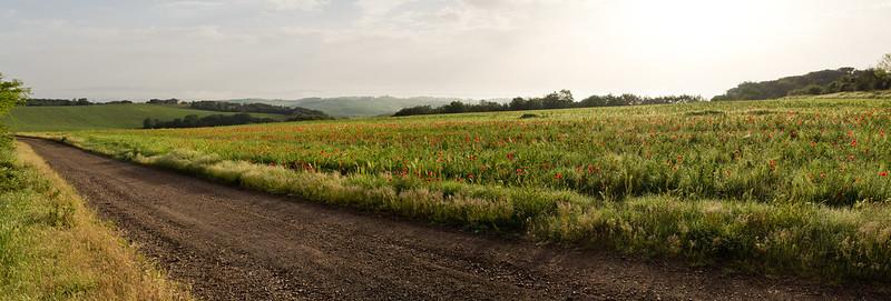 near Murlo
