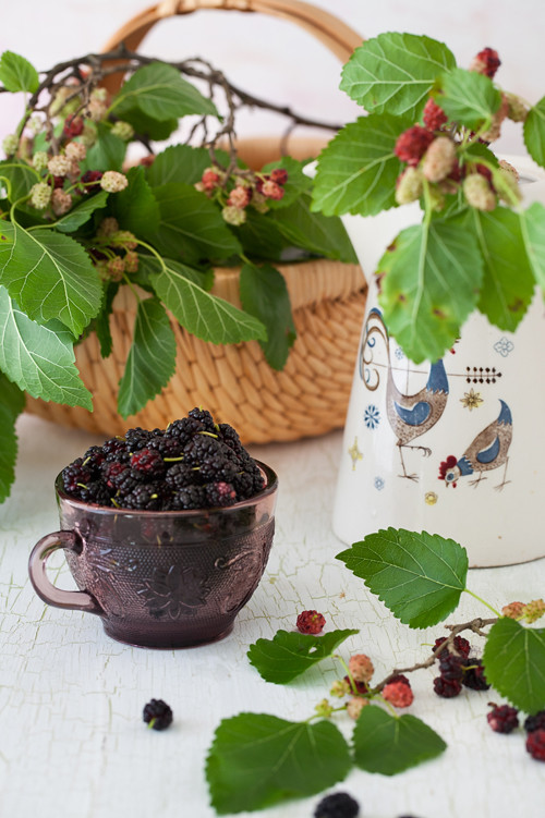 Mulberries 2