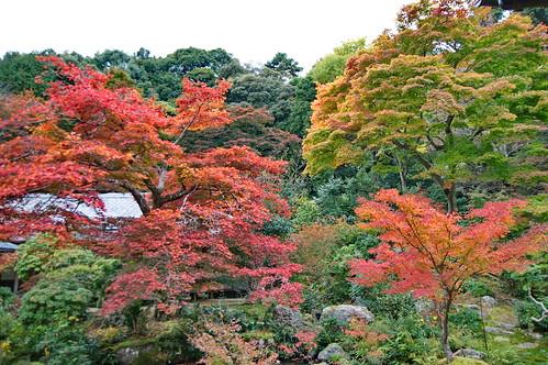 【写真】紅葉 : 実相院