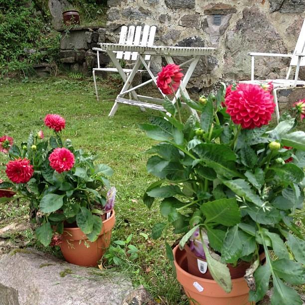 Rosor. Det är också blommor.