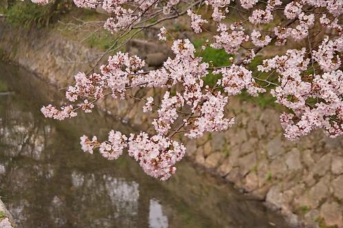 【写真】2013 桜 : 哲学の道/2018-12-24/IMGP9229