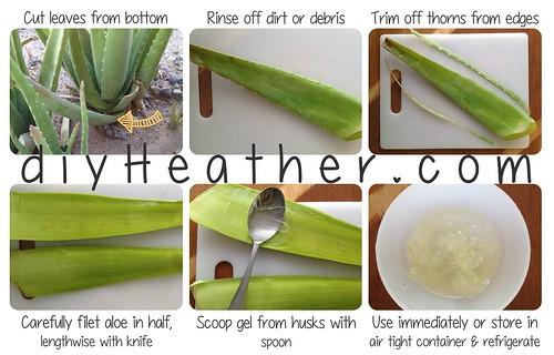 Aloe Vera by Heather Says
