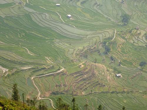 Yunnan13-Yuanyang 23-Laohuzui (2)