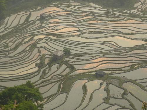 Yunnan13-Yuanyang 24-Bada (32)
