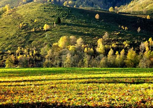 france automne couleurs frança couleur couleursdautomne jaunes amarillos midipyrénées hautespyrénées luminosité bagnèresdebigorre francelandscapes ahlafrance hautebigorre hautadour mididelafrance alléesmaintenon