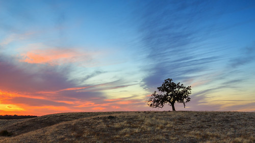 california sunset tree grass silhouette clouds day folsom oaktree pwpartlycloudy