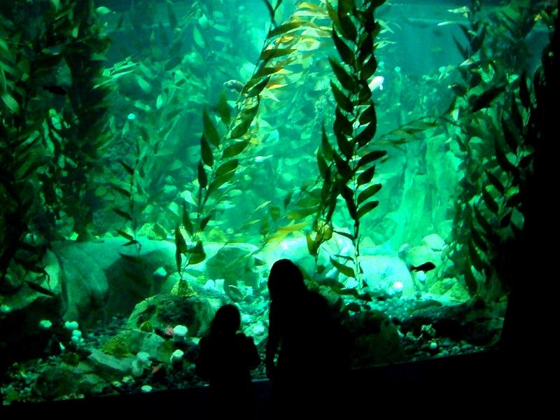 Ripley's Aquarium kelp