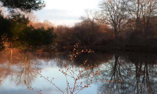 lakeweeds2