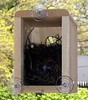 Great Window Nest Box – Best Buy