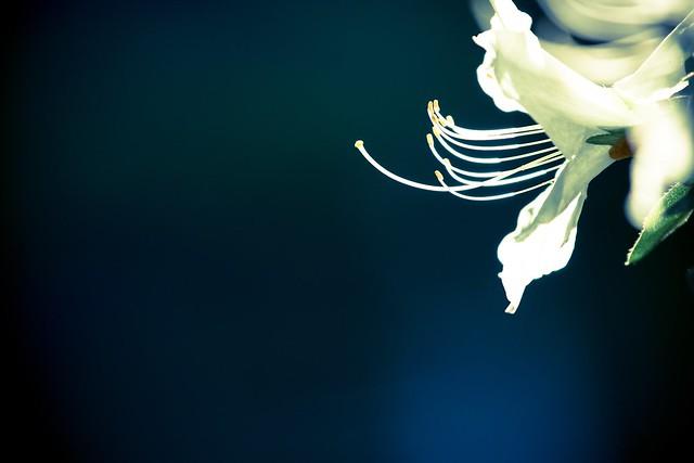 写真_白の終宴3