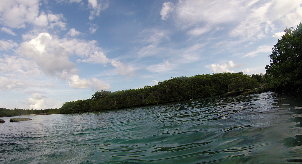 Yucatan trip photos from snorkling 11976001504_802e9e0e4c_b