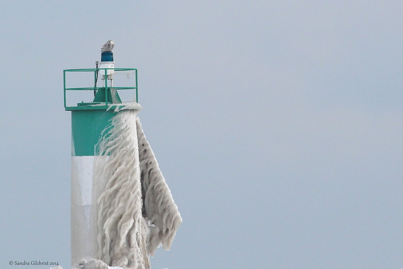 Snowy Owl on a Lighthouse - Explored - Feb 12, 2014