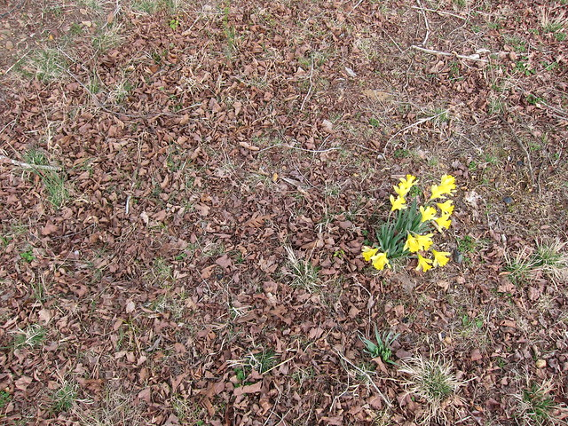 trungpa spring