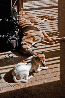 52 Weeks For Dogs, 16/52 - Going For That Stripy Suntan