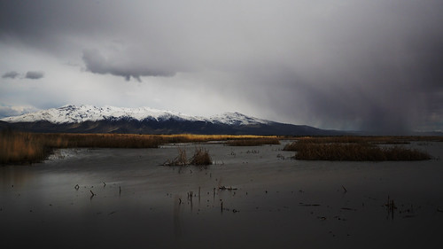 lassen county honey lake wildlife refuge