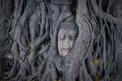 Buddha head entwined in tree roots at Wat Mahathat in Ayutthaya, Thailand