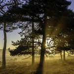 NF Sunrise