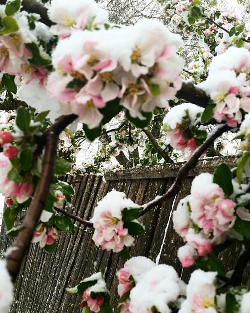 Winter in April