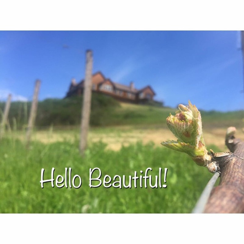 Isn't she beautiful! #oregonwine #oregonwinecountry #willamettevalley #mcminnville #mcminnvilleoregon #oregonwinemonth #travel #traveloregon #sun #sunshine