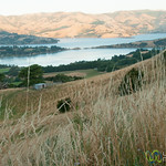 View of Glen Bay above Akaroa, New Zealand