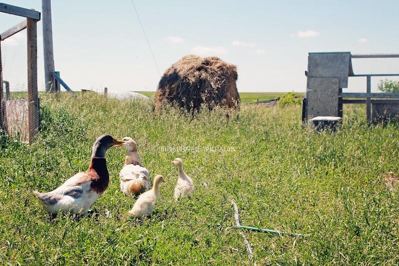 Zak's Farm