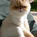 """Cat""""© Chelsea Stark http://www.chelseastarkphotography.com"""