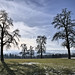 Ottenbach Trees by Roger_T