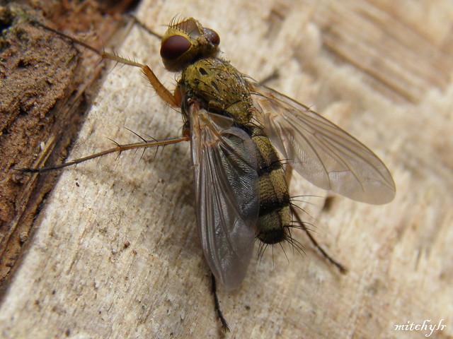 Big Fly 2