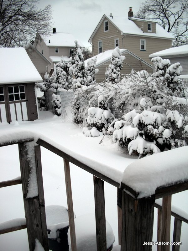 Snow-covered-railings