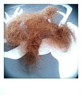 Haarausfall erste Augustwoche